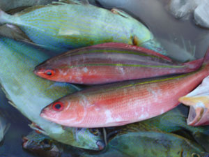 two red fish